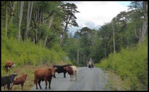 on a eu très peur en passant devant ce taureau. Il aurait pu creuver nos beaux schwalbe !!